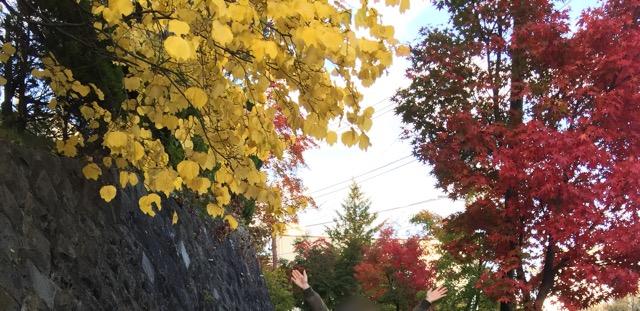 草津温泉 紅葉見ごろ画像