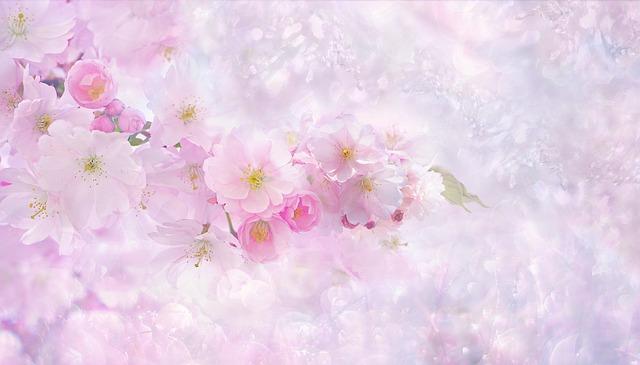 お店の桜 乱れ咲き?写真リベンジ!と楽天・Amazon・  Yahoo!比較続編