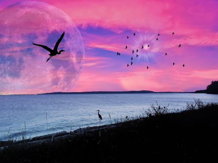 深呼吸しよう♪ 芝桜の香りのピンクスーパームーン*天秤座の満月をみよう♪